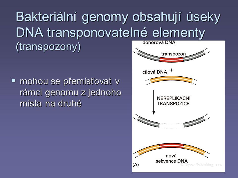 Bakteriální genomy obsahují úseky DNA transponovatelné elementy (transpozony) © Espero Publishing, s.r.o.  mohou se přemísťovat v rámci genomu z jedn