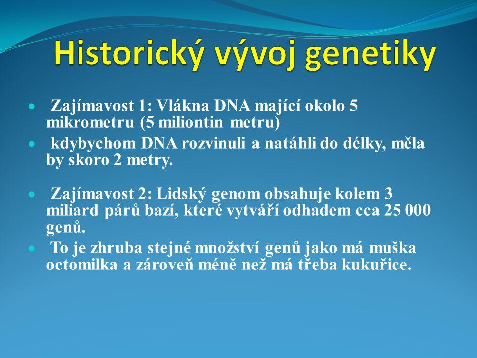  Zajímavost 1: Vlákna DNA mající okolo 5 mikrometru (5 miliontin metru)  kdybychom DNA rozvinuli a natáhli do délky, měla by skoro 2 metry.  Zajíma