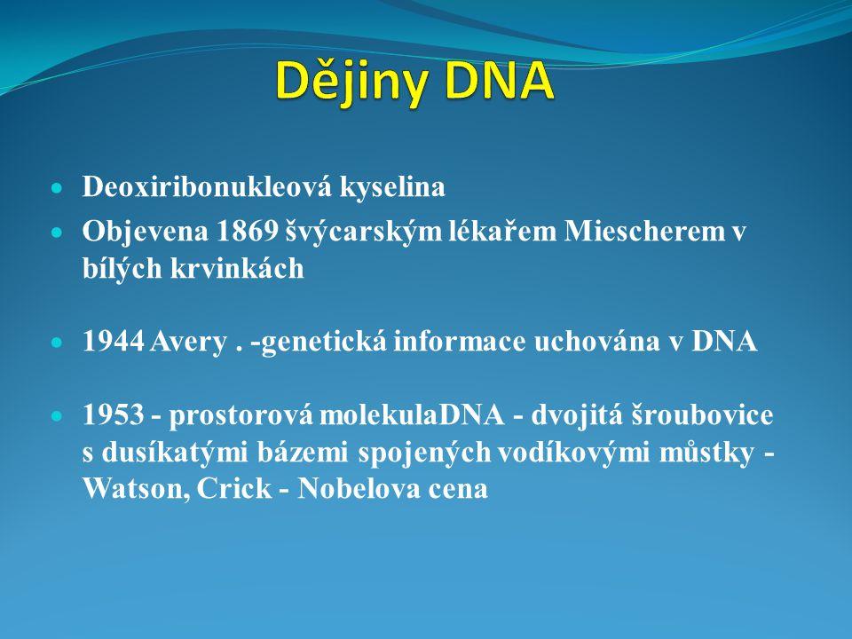  Deoxiribonukleová kyselina  Objevena 1869 švýcarským lékařem Miescherem v bílých krvinkách  1944 Avery. -genetická informace uchována v DNA  1953