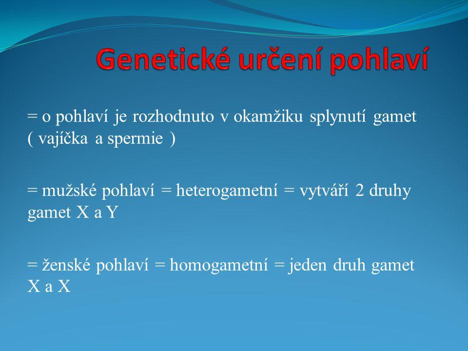 = o pohlaví je rozhodnuto v okamžiku splynutí gamet ( vajíčka a spermie ) = mužské pohlaví = heterogametní = vytváří 2 druhy gamet X a Y = ženské pohl