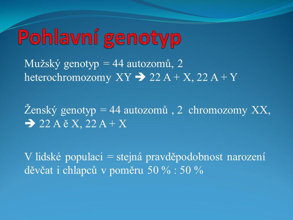 Mužský genotyp = 44 autozomů, 2 heterochromozomy XY  22 A + X, 22 A + Y Ženský genotyp = 44 autozomů, 2 chromozomy XX,  22 A ě X, 22 A + X V lidské