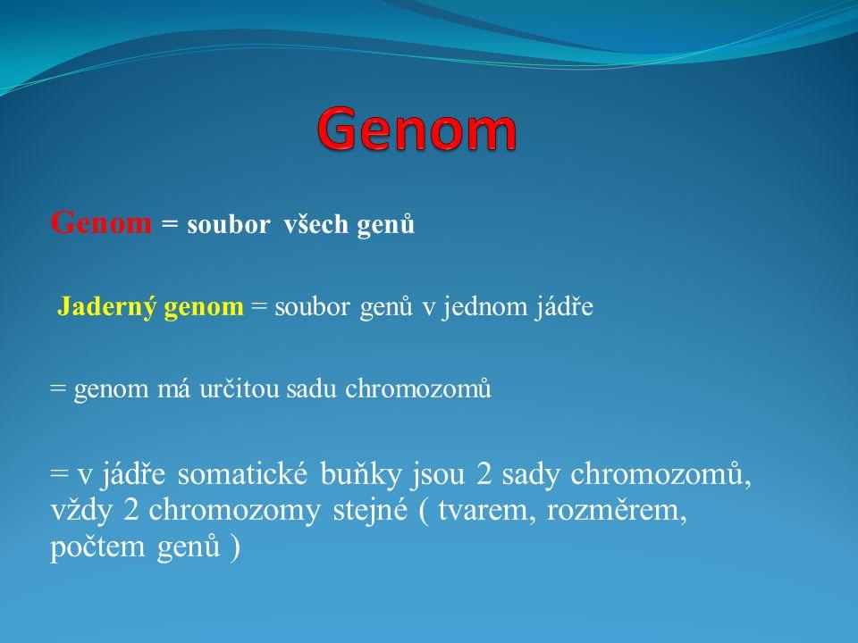 Genom = soubor všech genů Jaderný genom = soubor genů v jednom jádře = genom má určitou sadu chromozomů = v jádře somatické buňky jsou 2 sady chromozo