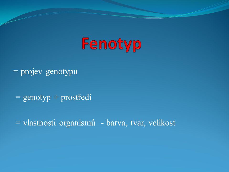 = projev genotypu = genotyp + prostředí = vlastnosti organismů - barva, tvar, velikost