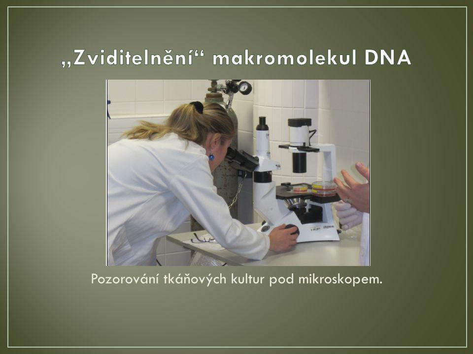 Pozorování tkáňových kultur pod mikroskopem.