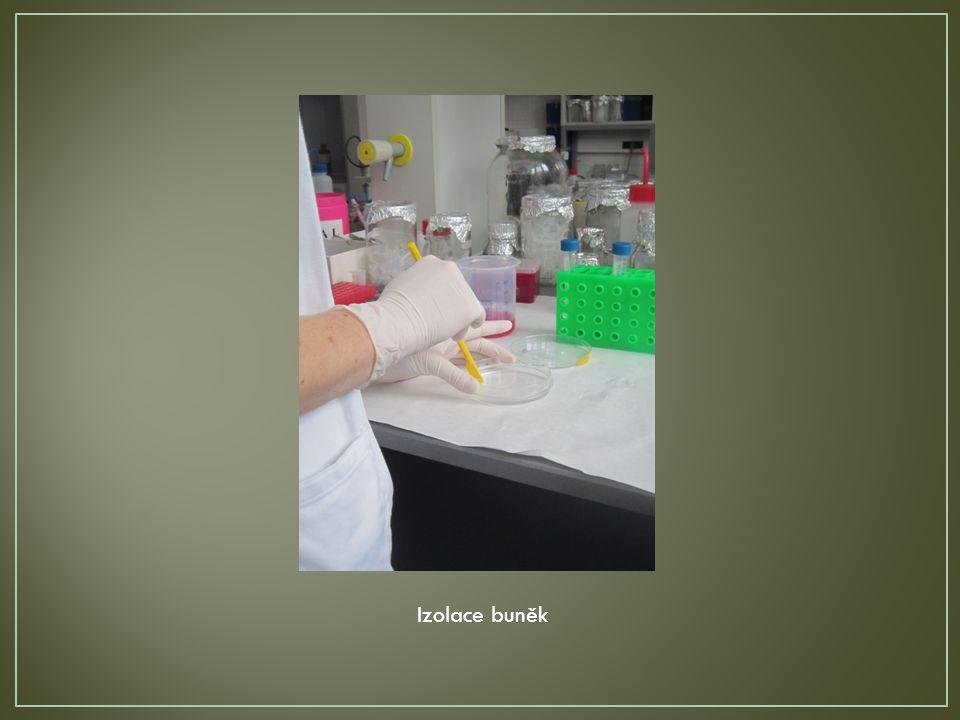 Izolace buněk