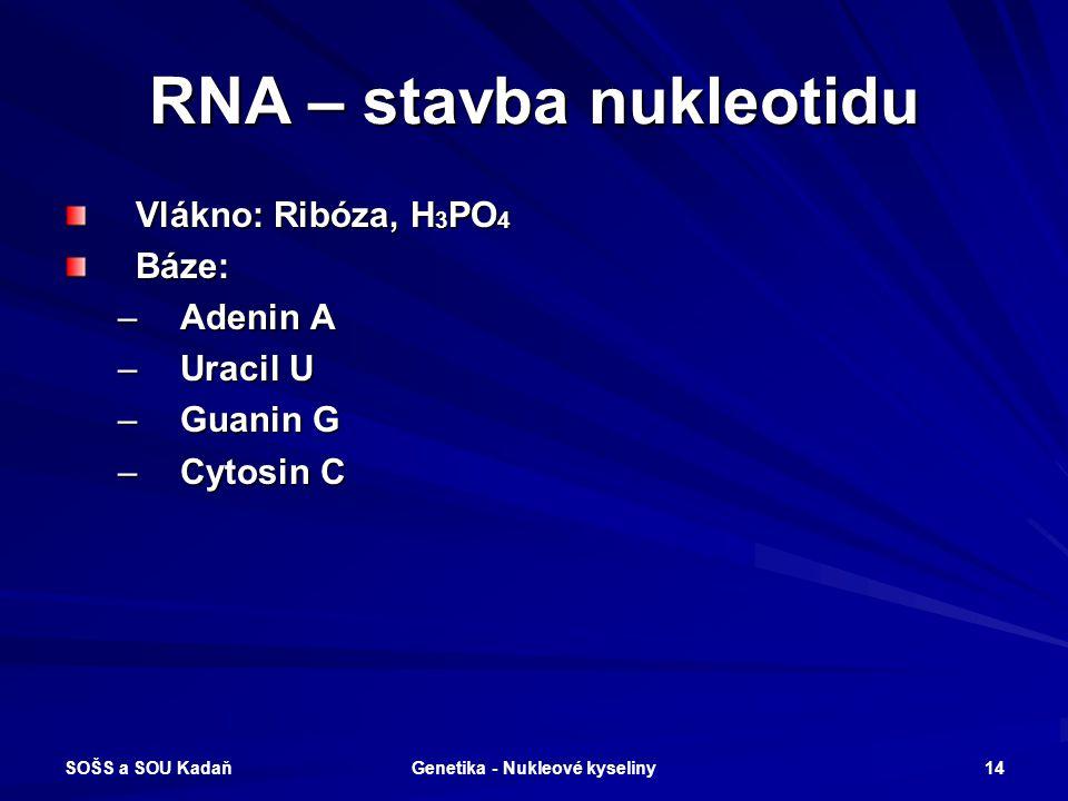 SOŠS a SOU Kadaň Genetika - Nukleové kyseliny 13 RNA Jednovláknová nukleová kyselina