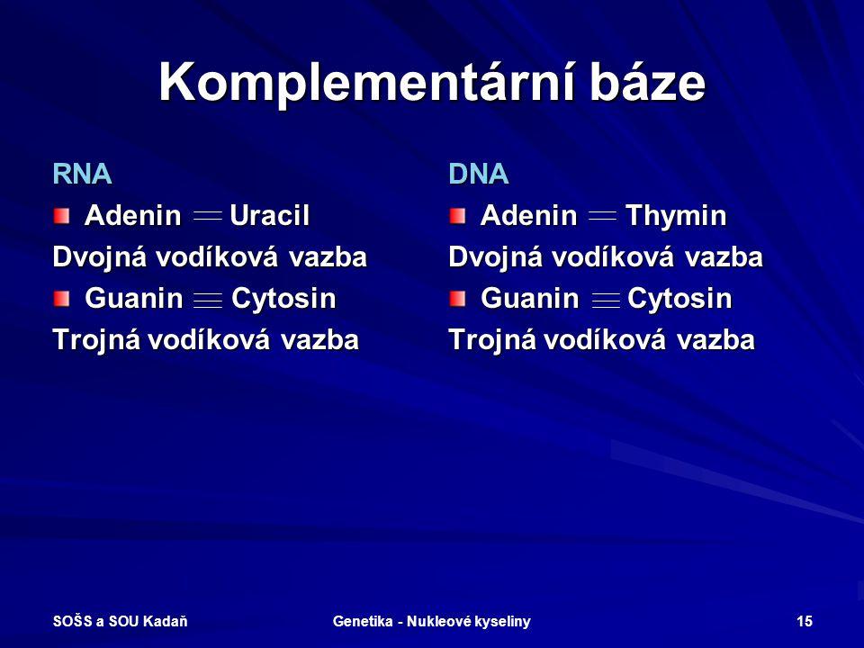 SOŠS a SOU Kadaň Genetika - Nukleové kyseliny 14 RNA – stavba nukleotidu Vlákno: Ribóza, H 3 PO 4 Báze: –Adenin A –Uracil U –Guanin G –Cytosin C