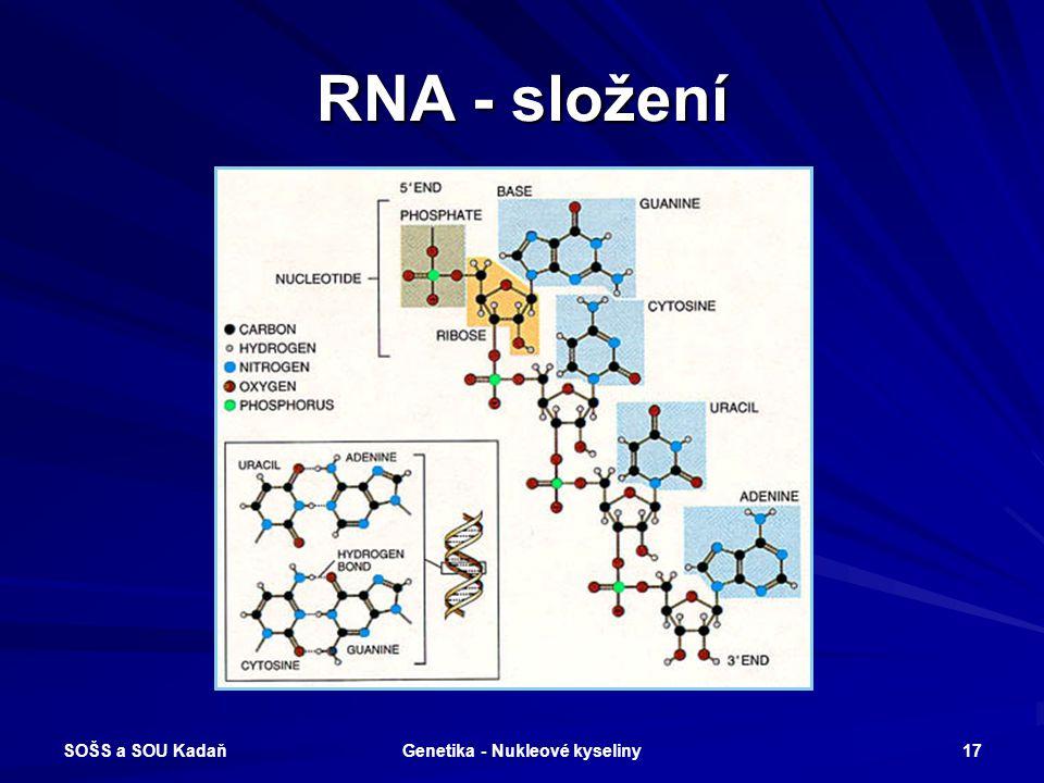 SOŠS a SOU Kadaň Genetika - Nukleové kyseliny 16 Odlišnosti DNA a RNA Molekuly RNA jsou tvořeny jediným polynukleotidovým řetězcem. Cukernou složkou j
