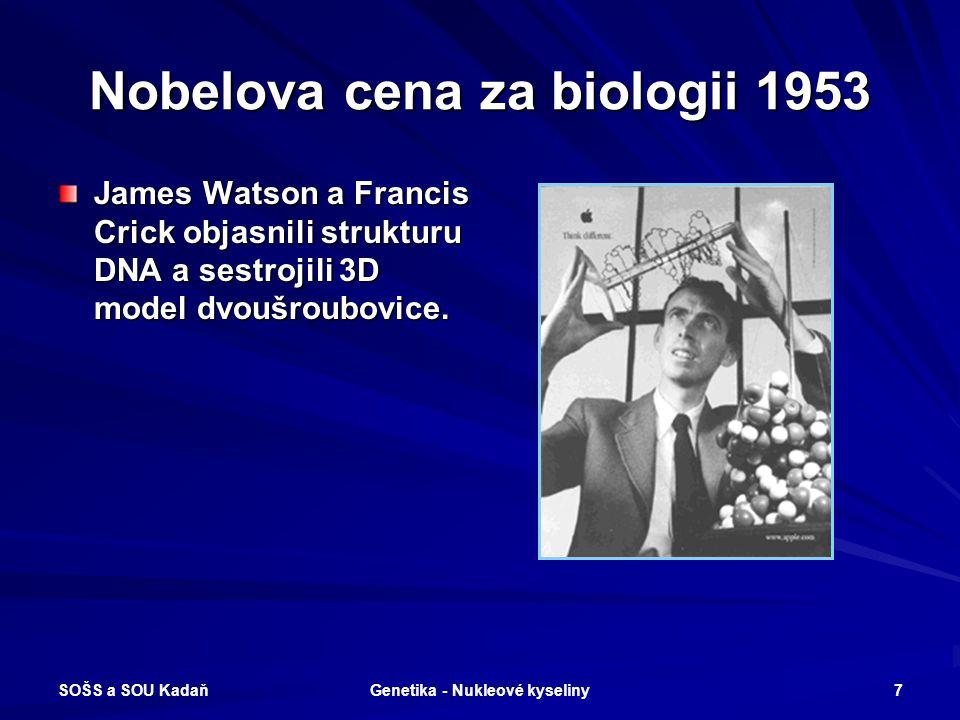 SOŠS a SOU Kadaň Genetika - Nukleové kyseliny 6 50 let od zobrazení modelu DNA V roce 2003 uběhlo 50 let od zobrazení modelu dvoušroubovice DNA – dube