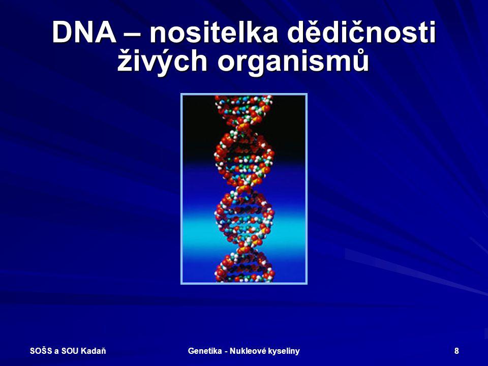 SOŠS a SOU Kadaň Genetika - Nukleové kyseliny 7 Nobelova cena za biologii 1953 James Watson a Francis Crick objasnili strukturu DNA a sestrojili 3D mo