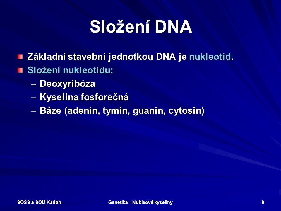 SOŠS a SOU Kadaň Genetika - Nukleové kyseliny 8 DNA – nositelka dědičnosti živých organismů
