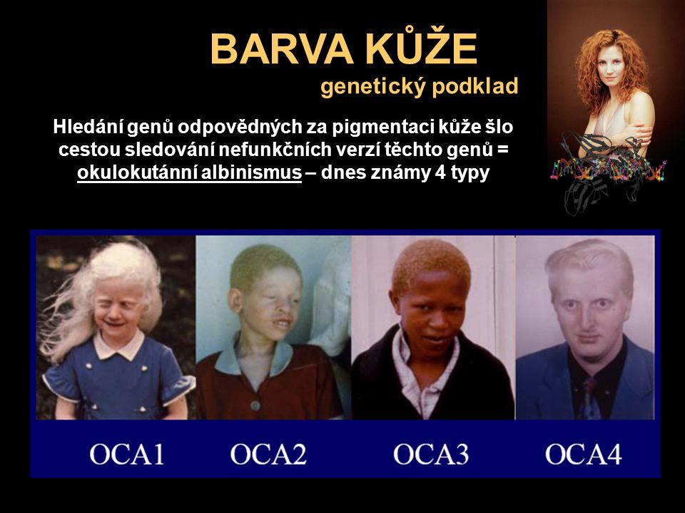 BARVA KŮŽE Hledání genů odpovědných za pigmentaci kůže šlo cestou sledování nefunkčních verzí těchto genů = okulokutánní albinismus – dnes známy 4 typ