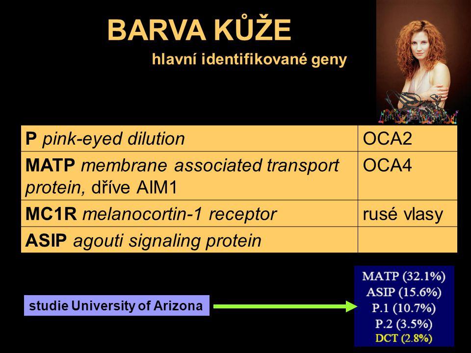 BARVA KŮŽE hlavní identifikované geny P pink-eyed dilutionOCA2 MATP membrane associated transport protein, dříve AIM1 OCA4 MC1R melanocortin-1 recepto