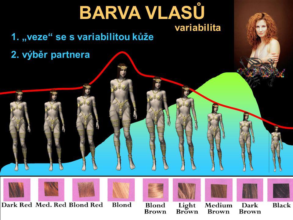 """BARVA VLASŮ kůže variabilita 1.""""veze"""" se s variabilitou kůže 2.výběr partnera"""