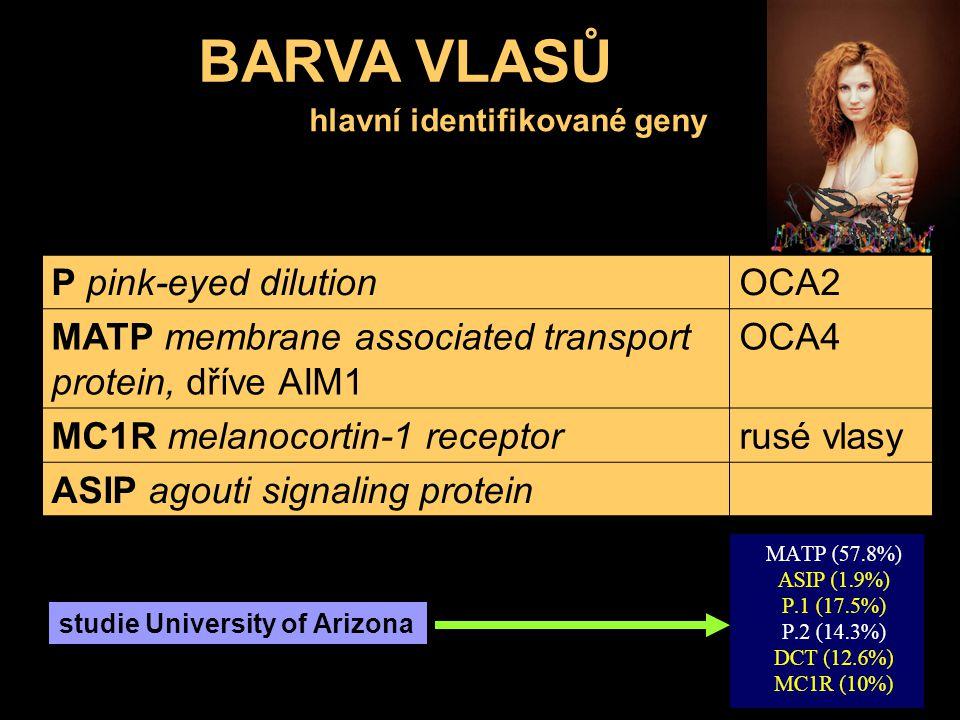 BARVA VLASŮ hlavní identifikované geny P pink-eyed dilutionOCA2 MATP membrane associated transport protein, dříve AIM1 OCA4 MC1R melanocortin-1 recept