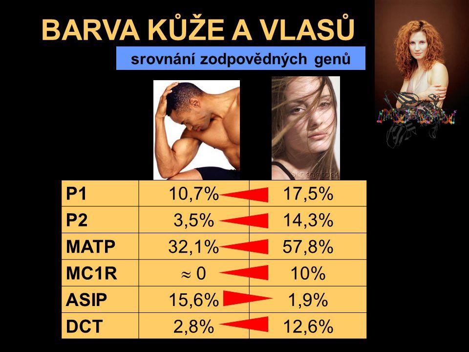 BARVA KŮŽE A VLASŮ srovnání zodpovědných genů P110,7%17,5% P23,5%14,3% MATP32,1%57,8% MC1R  0 10% ASIP15,6%1,9% DCT2,8%12,6%