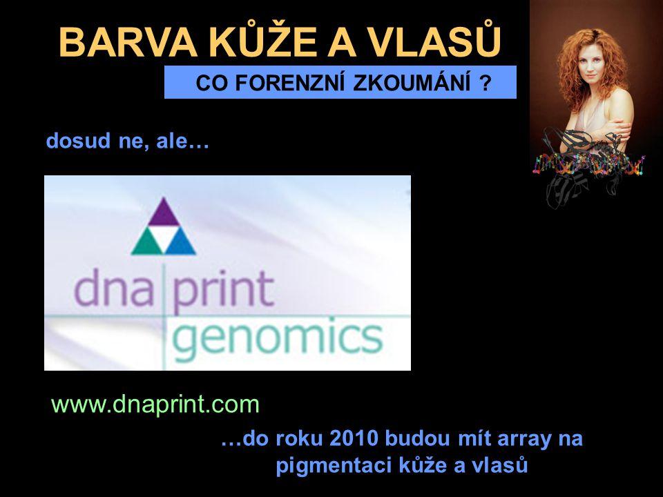 BARVA KŮŽE A VLASŮ CO FORENZNÍ ZKOUMÁNÍ ? www.dnaprint.com dosud ne, ale… …do roku 2010 budou mít array na pigmentaci kůže a vlasů