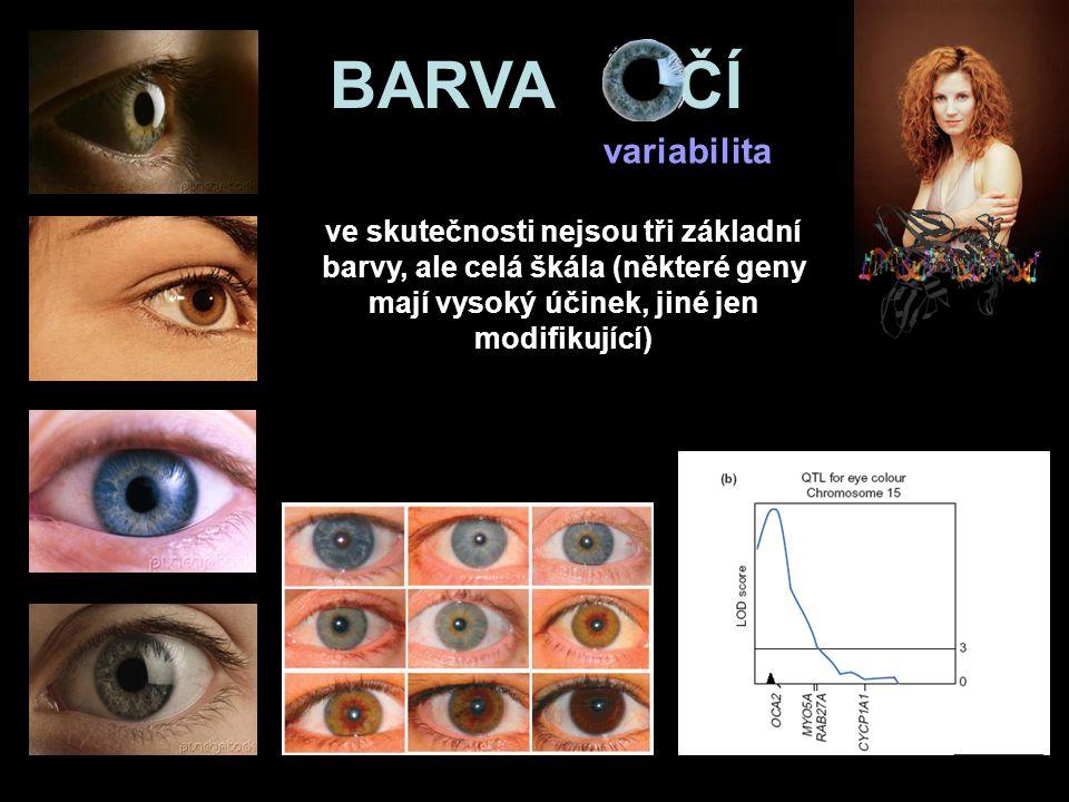 ve skutečnosti nejsou tři základní barvy, ale celá škála (některé geny mají vysoký účinek, jiné jen modifikující) BARVA OČÍ variabilita