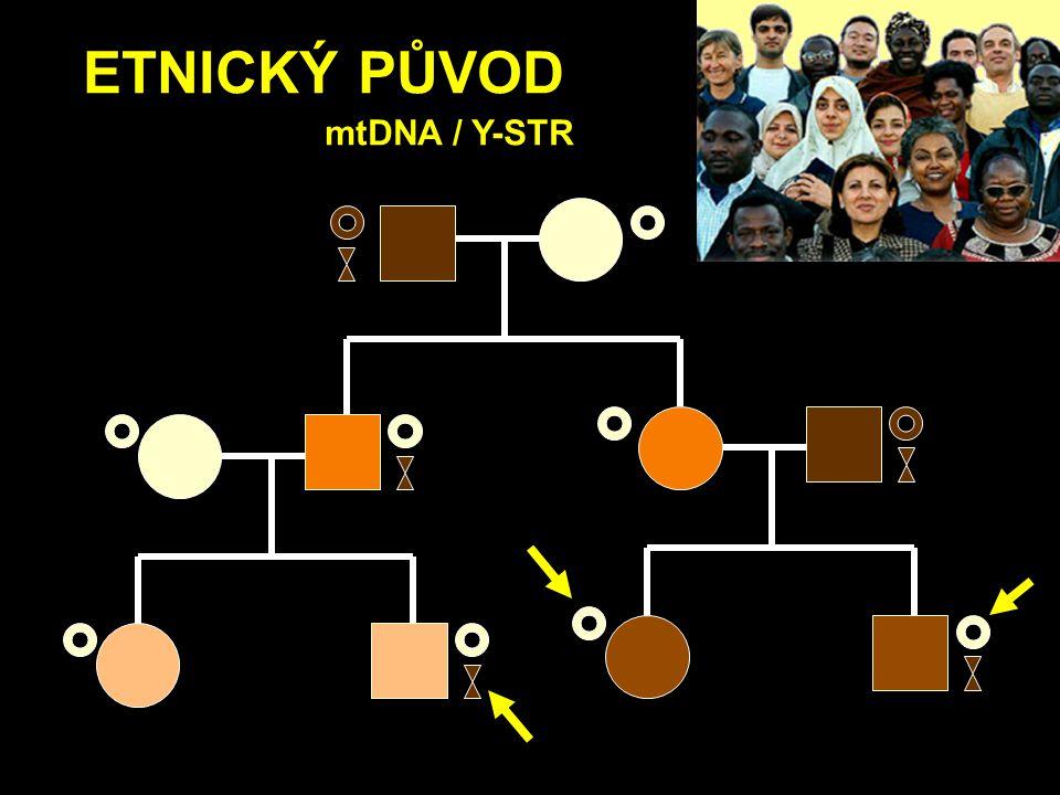ETNICKÝ PŮVOD mtDNA / Y-STR