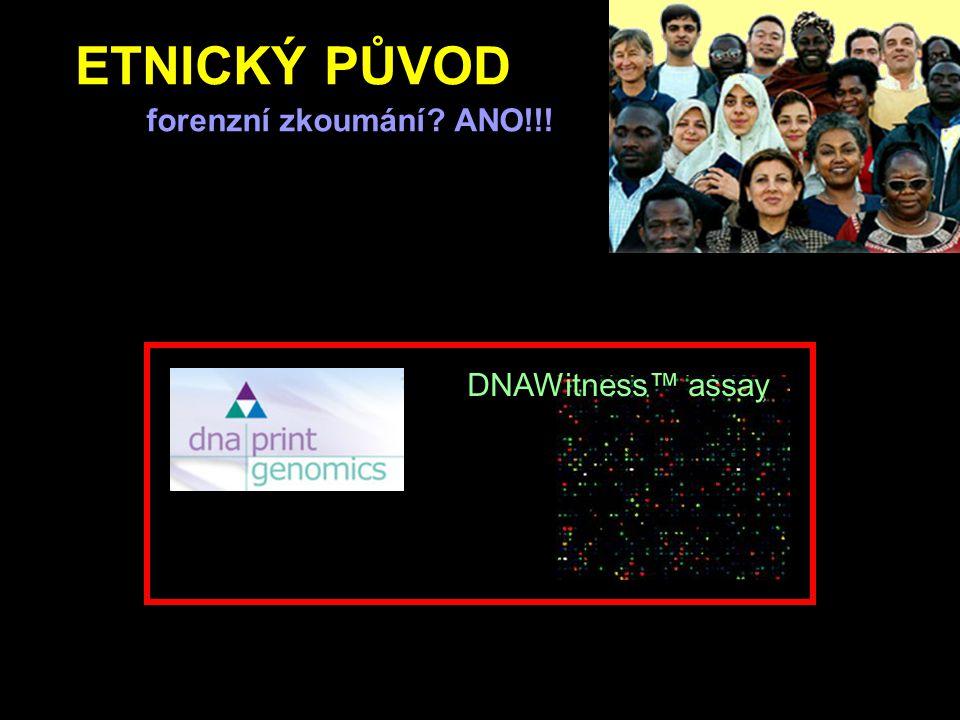 ETNICKÝ PŮVOD forenzní zkoumání? ANO!!! DNAWitness™ assay