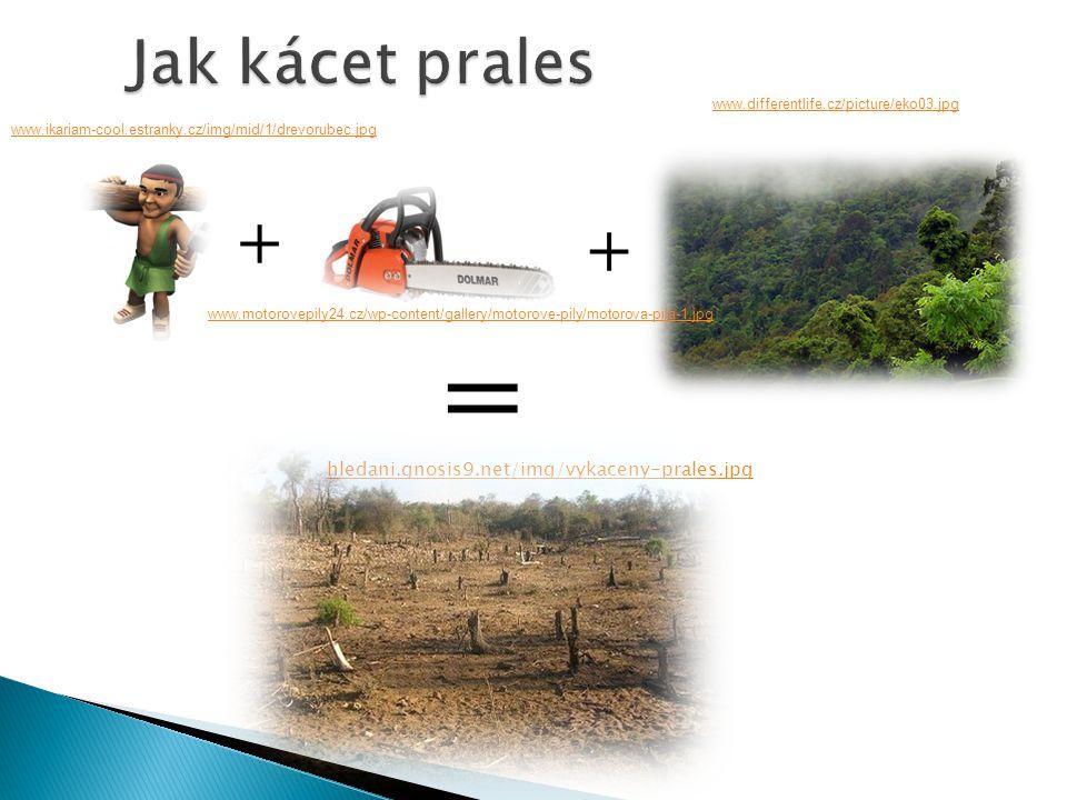 Jak kácet prales hledani.gnosis9.net/img/vykaceny-prales.jpg + + = www.motorovepily24.cz/wp-content/gallery/motorove-pily/motorova-pila-1.jpg www.ikar