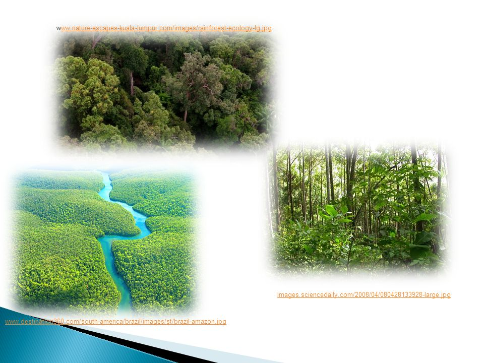 www.nature-escapes-kuala-lumpur.com/images/rainforest-ecology-lg.jpgww.nature-escapes-kuala-lumpur.com/images/rainforest-ecology-lg.jpg www.destination360.com/south-america/brazil/images/st/brazil-amazon.jpg images.sciencedaily.com/2008/04/080428133928-large.jpg