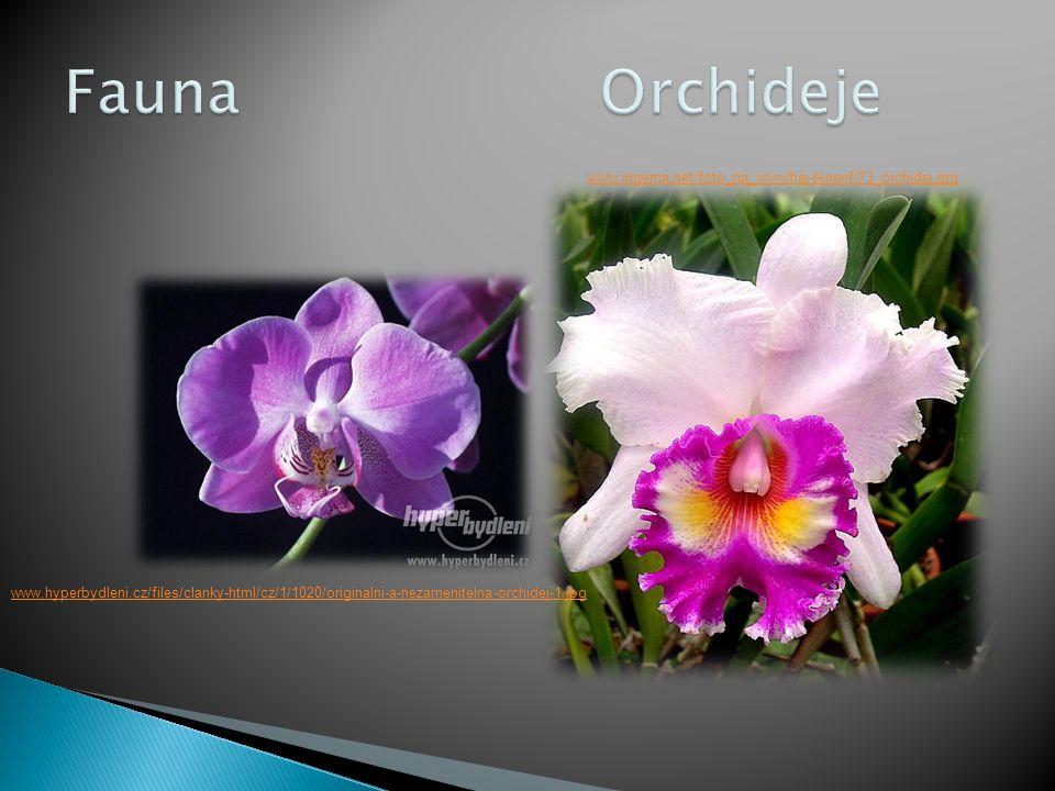 www.hyperbydleni.cz/files/clanky-html/cz/1/1020/originalni-a-nezamenitelna-orchidej-1.jpg www.ingema.net/foto_na_www/haj-tenerif/73_orchidej.jpg