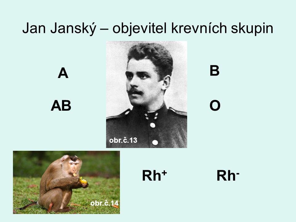 Jan Janský – objevitel krevních skupin A B ABO Rh + Rh - obr.č.13 obr.č.14