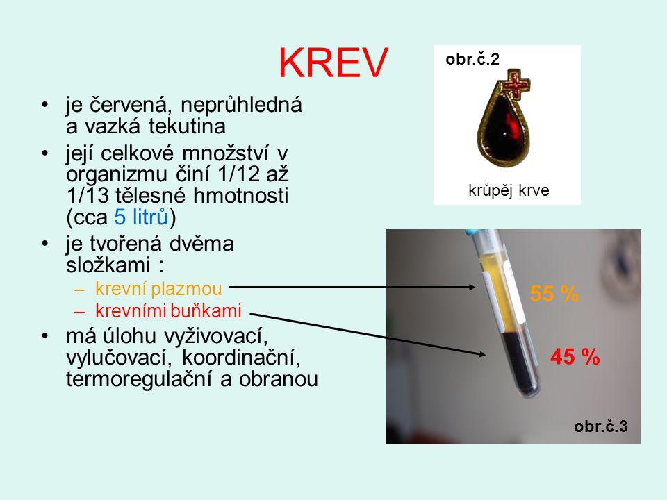 KREV je červená, neprůhledná a vazká tekutina její celkové množství v organizmu činí 1/12 až 1/13 tělesné hmotnosti (cca 5 litrů) je tvořená dvěma složkami : –krevní plazmou –krevními buňkami má úlohu vyživovací, vylučovací, koordinační, termoregulační a obranou 45 % 55 % krůpěj krve obr.č.2 obr.č.3
