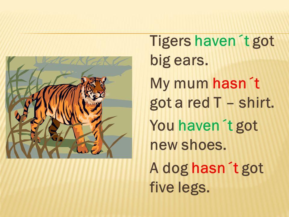 Tigers haven´t got big ears. My mum hasn´t got a red T – shirt. You haven´t got new shoes. A dog hasn´t got five legs.