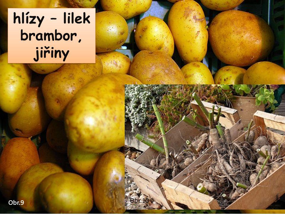 hlízy – lilek brambor, jiřiny Obr.9 Obr.10