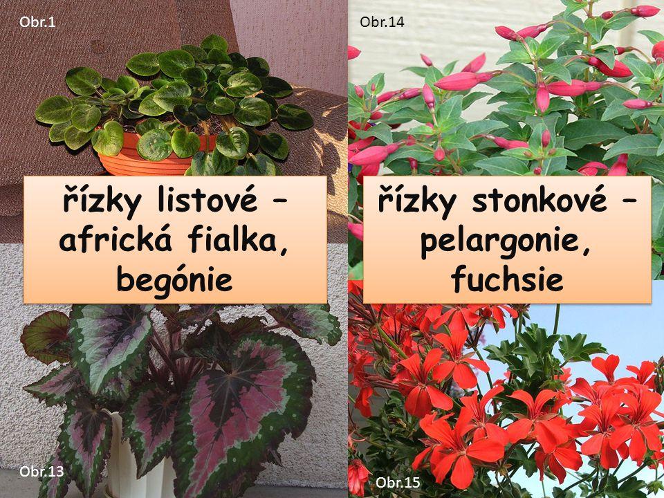 řízky listové – africká fialka, begónie řízky stonkové – pelargonie, fuchsie Obr.1 Obr.13 Obr.14 Obr.15