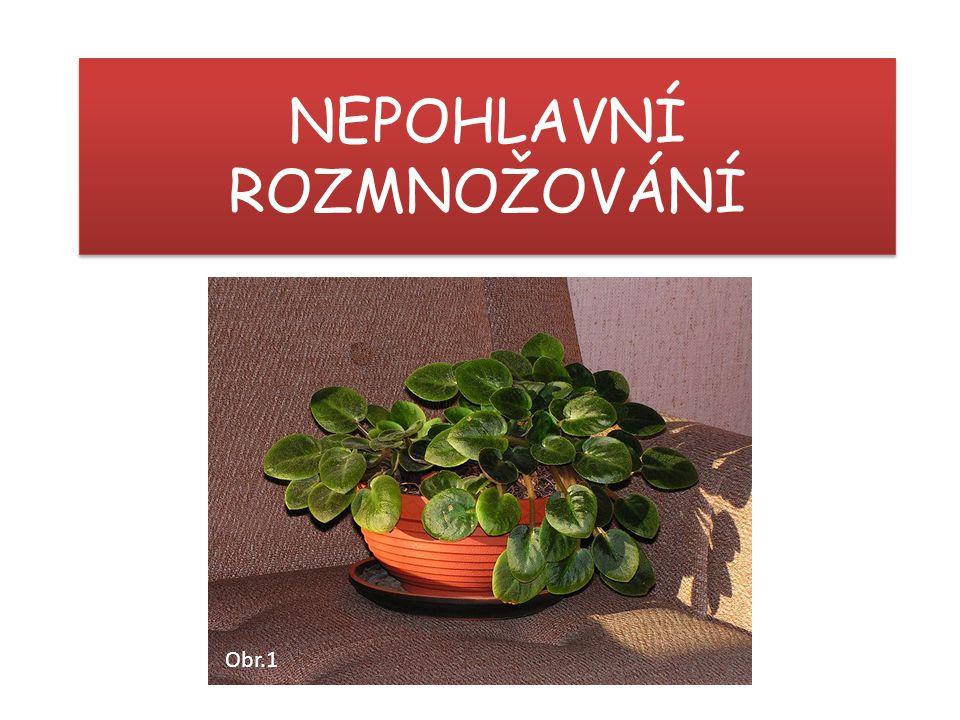 Strana 14 [OBR.11]: Krzysztof P.Jasiutowicz. [cit.2014-05-09].