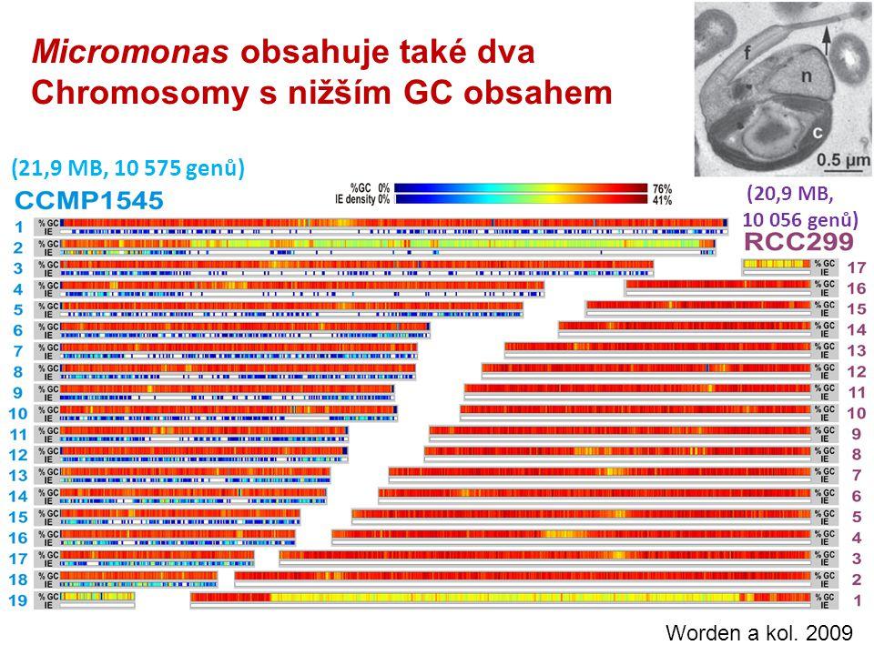 Micromonas obsahuje také dva Chromosomy s nižším GC obsahem (21,9 MB, 10 575 genů) (20,9 MB, 10 056 genů) Worden a kol.