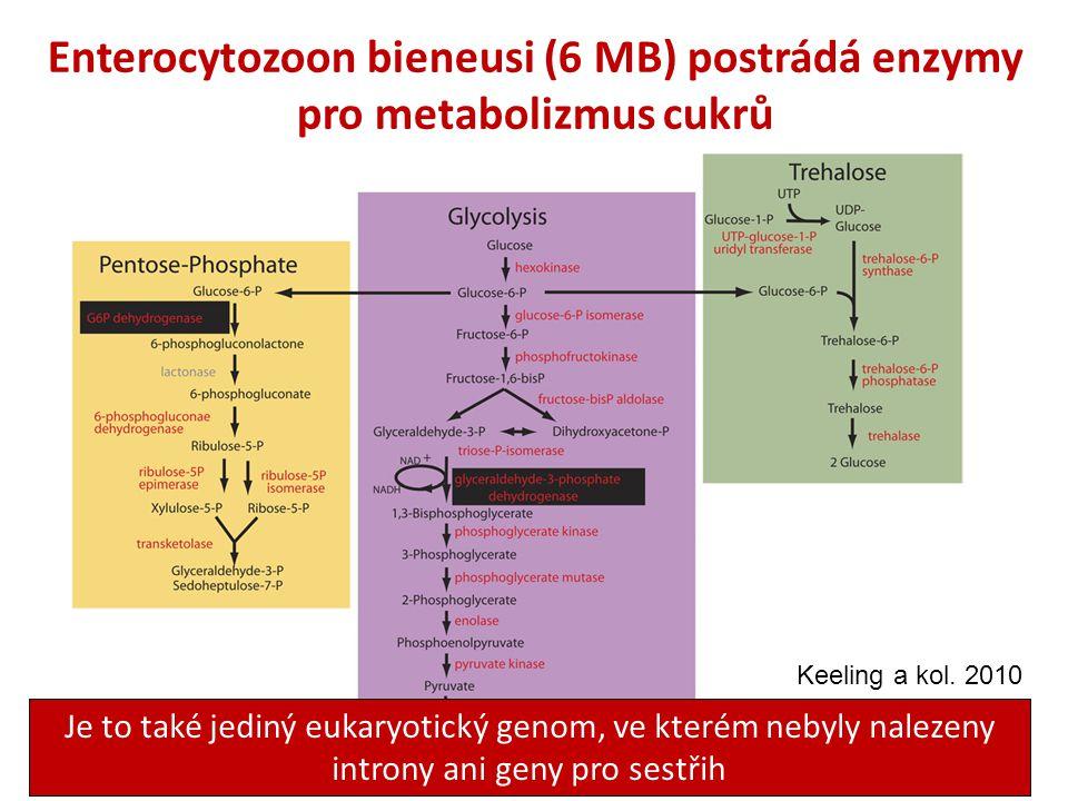 Enterocytozoon bieneusi (6 MB) postrádá enzymy pro metabolizmus cukrů Je to také jediný eukaryotický genom, ve kterém nebyly nalezeny introny ani geny pro sestřih Keeling a kol.