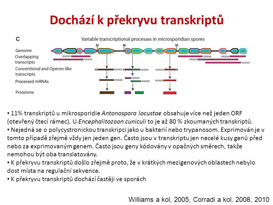 Dochází k překryvu transkriptů 11% transkriptů u mikrosporidie Antonospora locustae obsahuje více než jeden ORF (otevřený čtecí rámec). U Encephalitoz