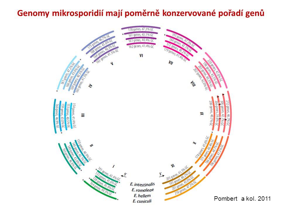 Genomy mikrosporidií mají poměrně konzervované pořadí genů Pombert a kol. 2011