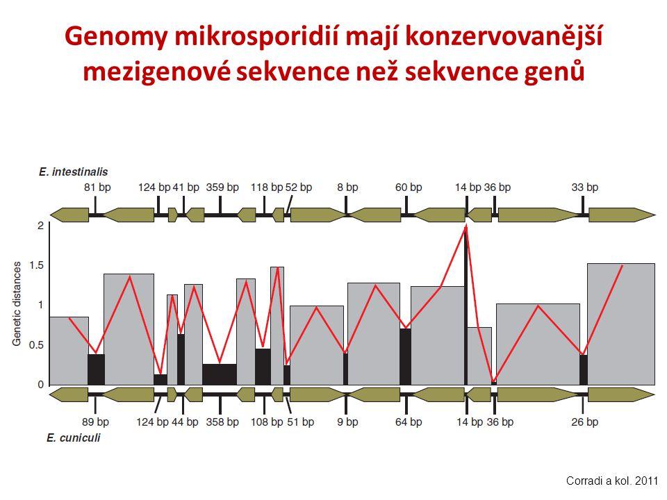 Genomy mikrosporidií mají konzervovanější mezigenové sekvence než sekvence genů Corradi a kol. 2011