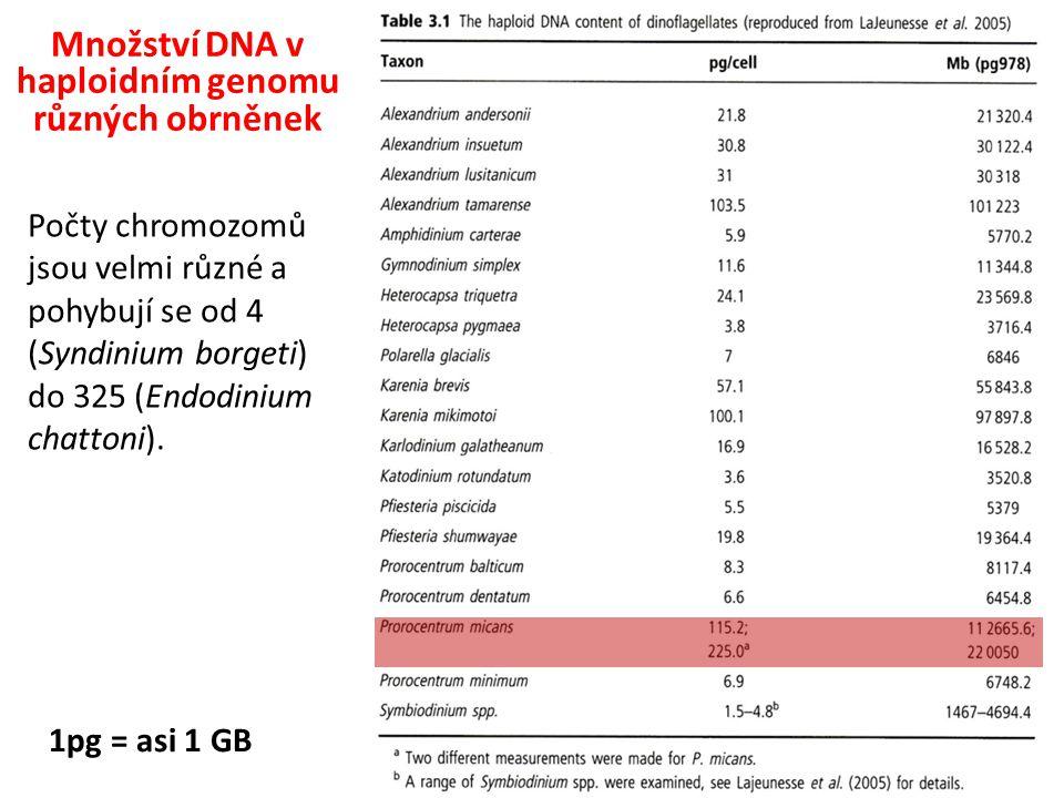 1pg = asi 1 GB Množství DNA v haploidním genomu různých obrněnek Počty chromozomů jsou velmi různé a pohybují se od 4 (Syndinium borgeti) do 325 (Endodinium chattoni).