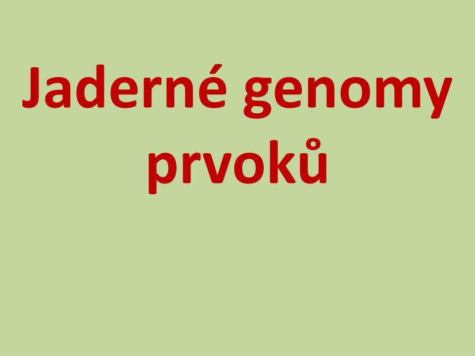 Jaderné genomy prvoků