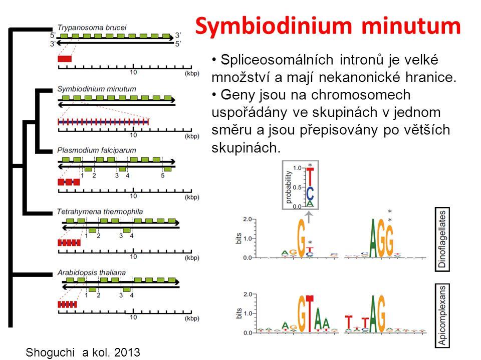 Shoguchi a kol.2013 Spliceosomálních intronů je velké množství a mají nekanonické hranice.