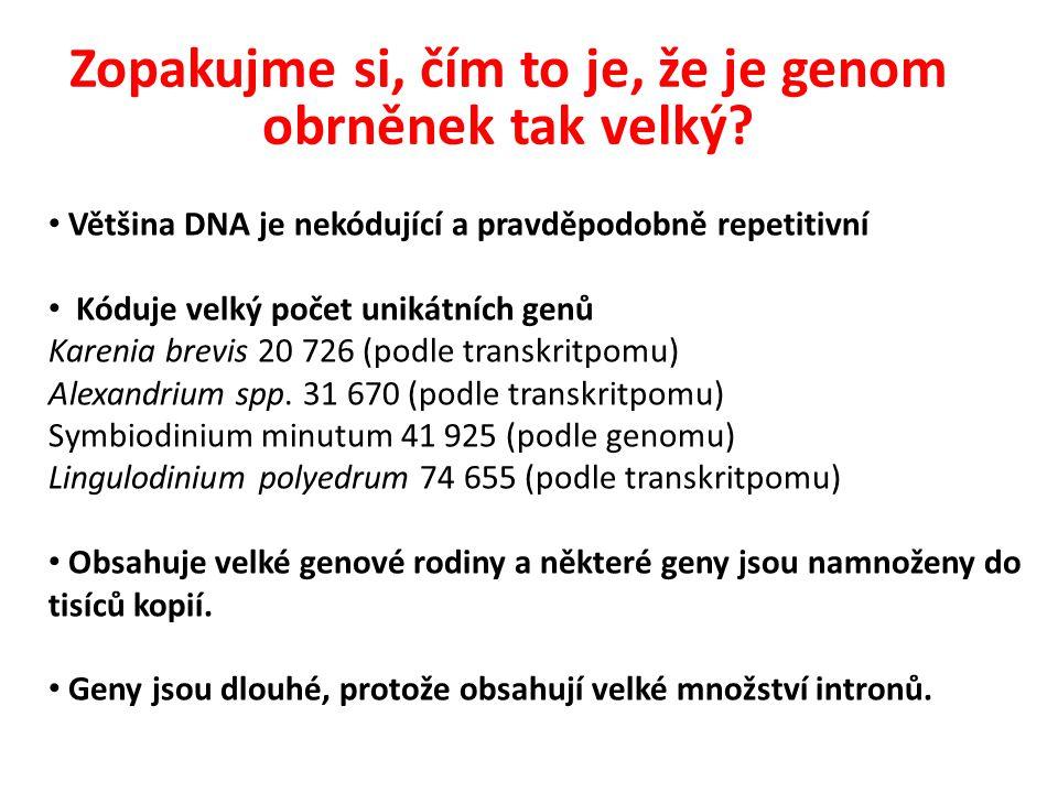 Většina DNA je nekódující a pravděpodobně repetitivní Kóduje velký počet unikátních genů Karenia brevis 20 726 (podle transkritpomu) Alexandrium spp.