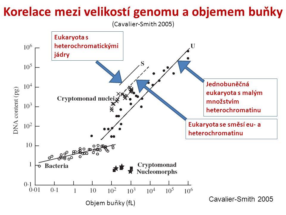 Objem buňky (fL) Korelace mezi velikostí genomu a objemem buňky (Cavalier-Smith 2005) Jednobuněčná eukaryota s malým množstvím heterochromatinu Eukaryota se směsí eu- a heterochromatinu Eukaryota s heterochromatickými jádry Cavalier-Smith 2005