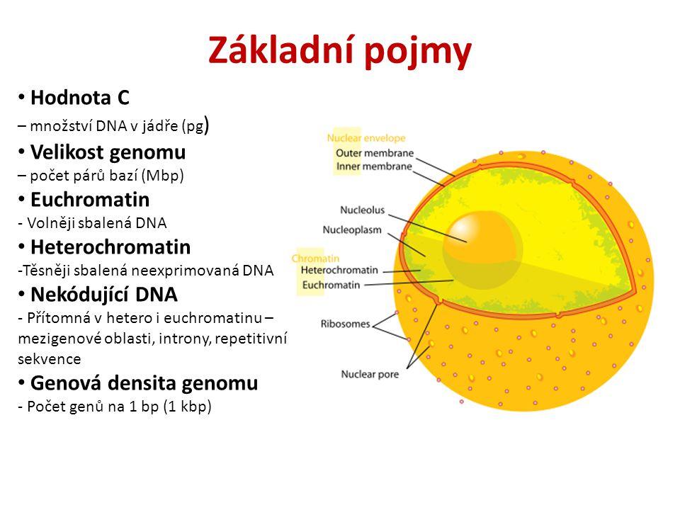 Základní pojmy Hodnota C – množství DNA v jádře (pg ) Velikost genomu – počet párů bazí (Mbp) Euchromatin - Volněji sbalená DNA Heterochromatin -Těsněji sbalená neexprimovaná DNA Nekódující DNA - Přítomná v hetero i euchromatinu – mezigenové oblasti, introny, repetitivní sekvence Genová densita genomu - Počet genů na 1 bp (1 kbp)