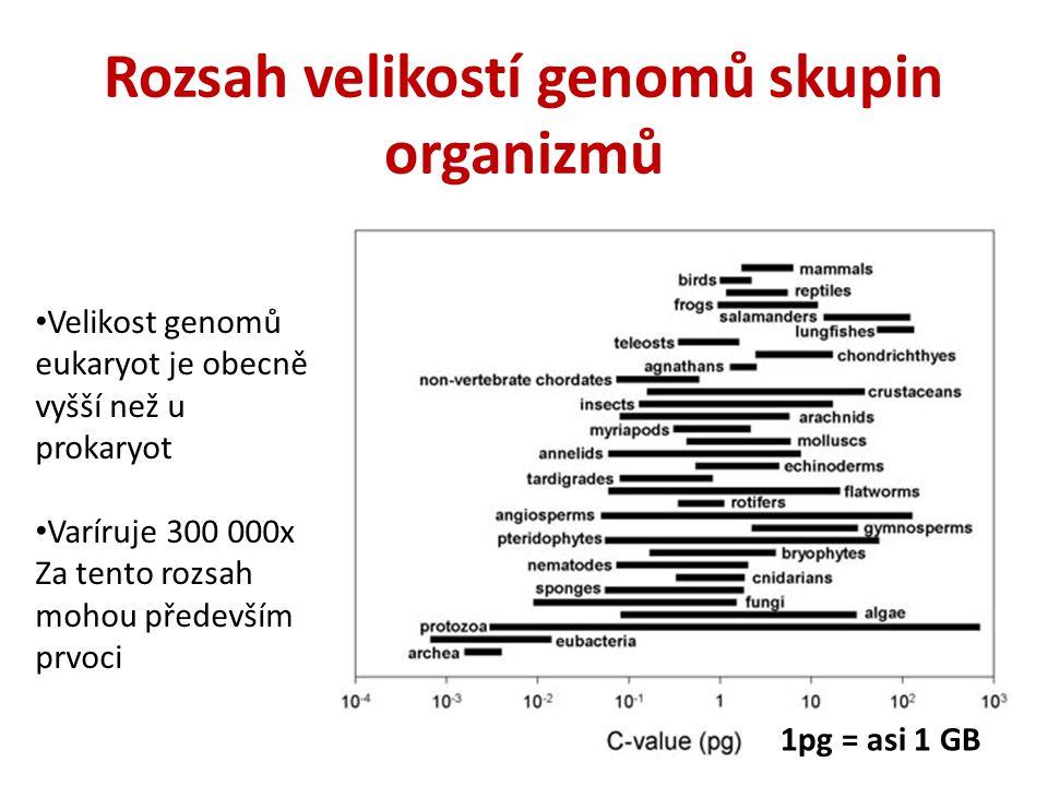 1pg = asi 1 GB Rozsah velikostí genomů skupin organizmů Velikost genomů eukaryot je obecně vyšší než u prokaryot Varíruje 300 000x Za tento rozsah moh