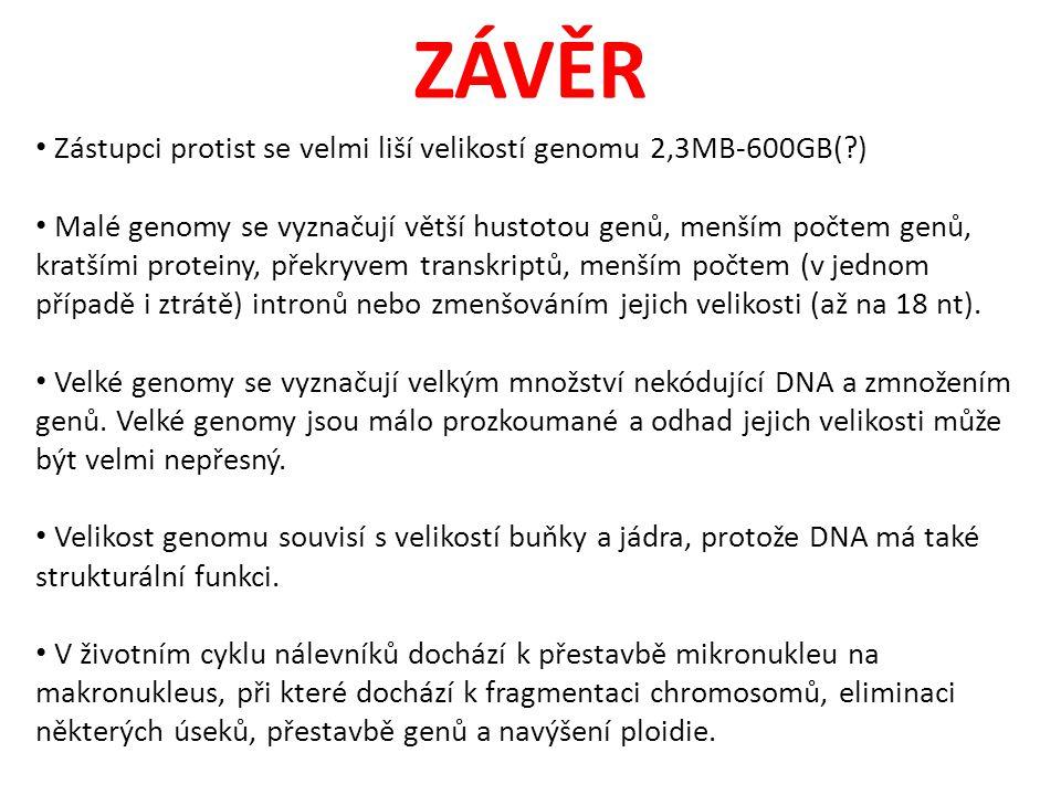ZÁVĚR Zástupci protist se velmi liší velikostí genomu 2,3MB-600GB(?) Malé genomy se vyznačují větší hustotou genů, menším počtem genů, kratšími proteiny, překryvem transkriptů, menším počtem (v jednom případě i ztrátě) intronů nebo zmenšováním jejich velikosti (až na 18 nt).