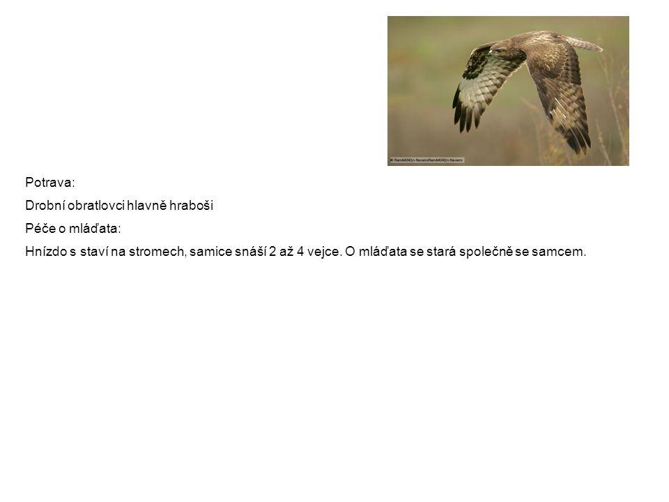 Potrava: Drobní obratlovci hlavně hraboši Péče o mláďata: Hnízdo s staví na stromech, samice snáší 2 až 4 vejce. O mláďata se stará společně se samcem