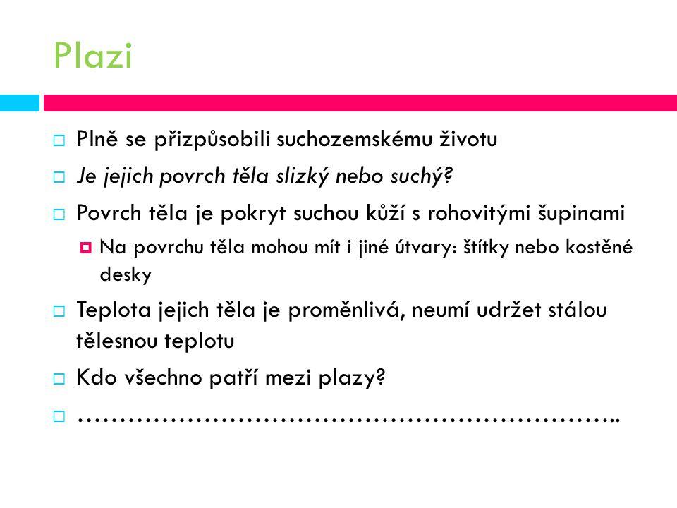 Plazi  Plně se přizpůsobili suchozemskému životu  Je jejich povrch těla slizký nebo suchý.