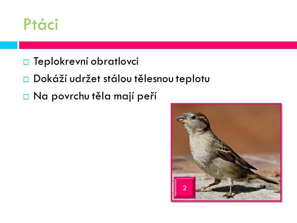 Ptáci  Teplokrevní obratlovci  Dokáží udržet stálou tělesnou teplotu  Na povrchu těla mají peří 2