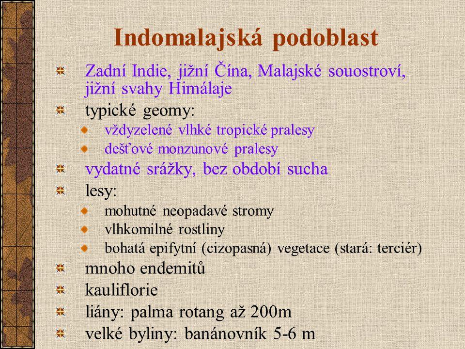 Indomalajská podoblast Zadní Indie, jižní Čína, Malajské souostroví, jižní svahy Himálaje typické geomy: vždyzelené vlhké tropické pralesy dešťové monzunové pralesy vydatné srážky, bez období sucha lesy: mohutné neopadavé stromy vlhkomilné rostliny bohatá epifytní (cizopasná) vegetace (stará: terciér) mnoho endemitů kauliflorie liány: palma rotang až 200m velké byliny: banánovník 5-6 m